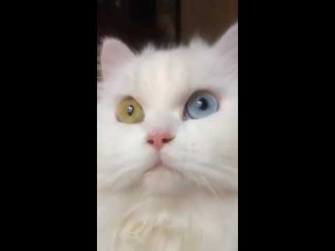 Cat Stage | your eyes are awesome