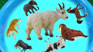 Learn Animals Names With Pictures For Kids, Lots Of Zoo Wild Animals In Pool Water