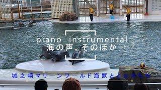 兵庫県 豊岡市城崎温泉近くにあるマリーワールド水族館。イルカショーと...