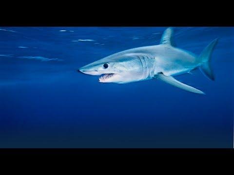 KOROLEV VLOG#35#ОКЕАН#OCEAN#AMAZON