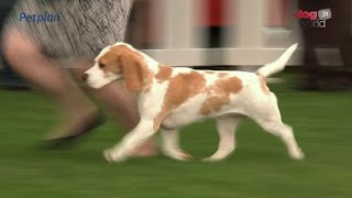 Darlington Dog Show 2015 - Hound Group Full