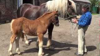 Konie - Świat Zwierząt Witoldzin 17