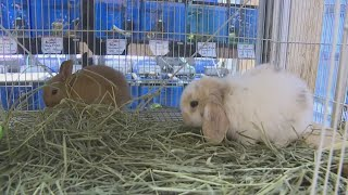 Kalihi Pet Center Offers A Variety Of Animals In Honor Of National Pet Day