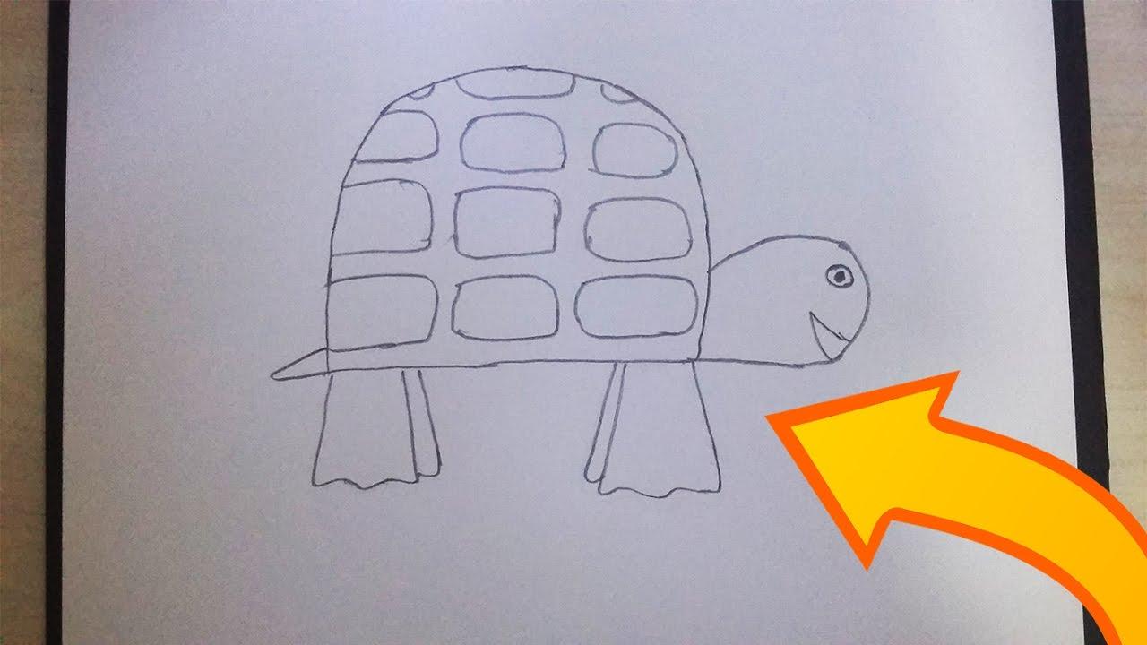 Basit Hayvan çizimi Kaplumbağa Youtube