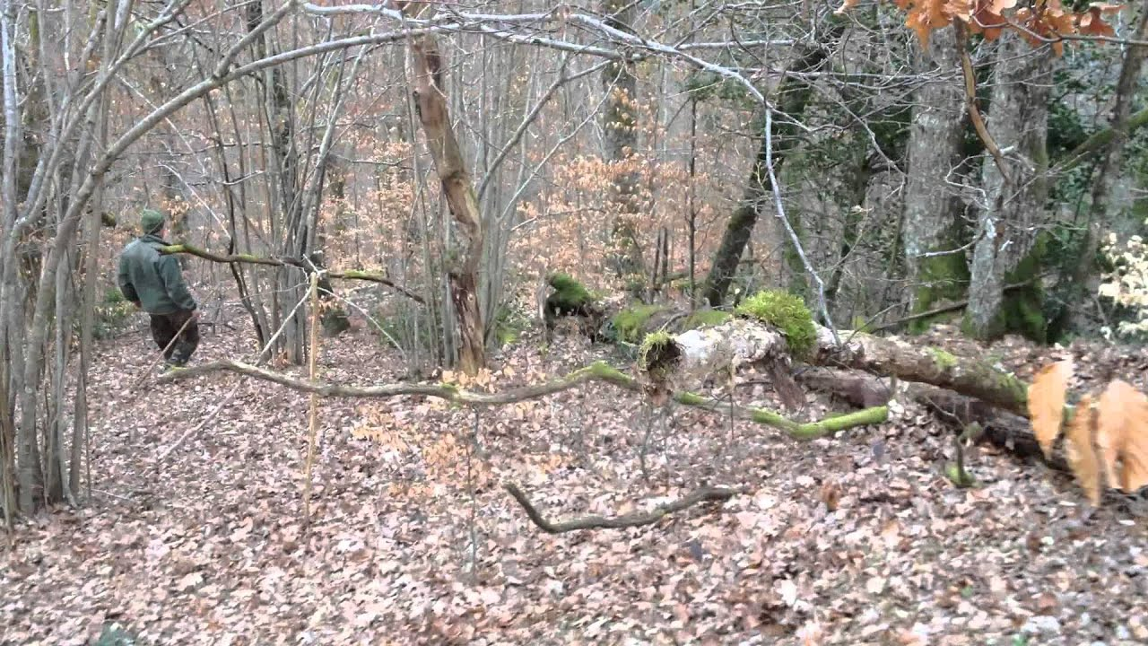 Image Bois De Cerf : bois de cerf saison 2015, 16 cors – YouTube