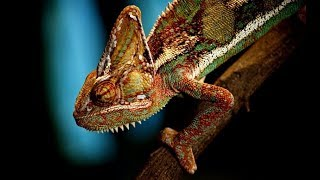 Nature's Cheats | How Animals Trick and Deceive - Most Extreme Animals In The World