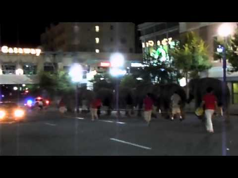 Elephants Walk The Streets of Salt Lake City