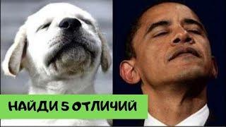 двойники знаменитостей из мира животных №2 (Найди 5 отличий)