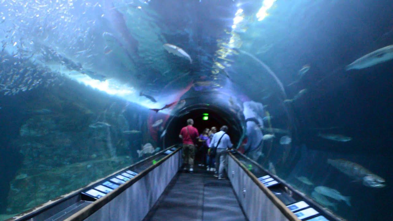 Aquarium Of The Bay Tunnel San Francisco Youtube
