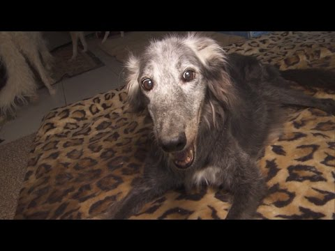 25-Year-Old Rescue Dog Could Be The Oldest Pooch In The World