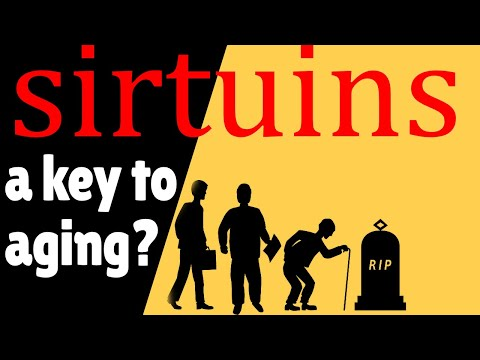Sirtuins Longevity - What They Can Offer & How they May Help Extend Life