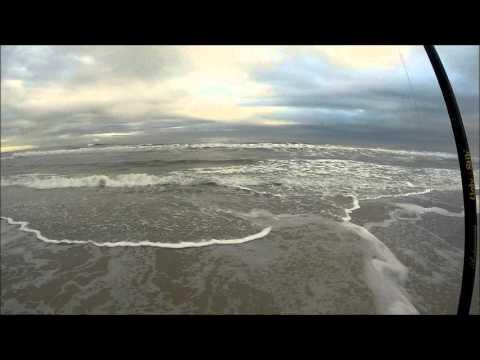Florida fishing jacksonville beach whiting youtube for Whiting fish florida