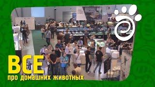 AquaTerraShow 2016. Все О Домашних Животных (english subtitles)