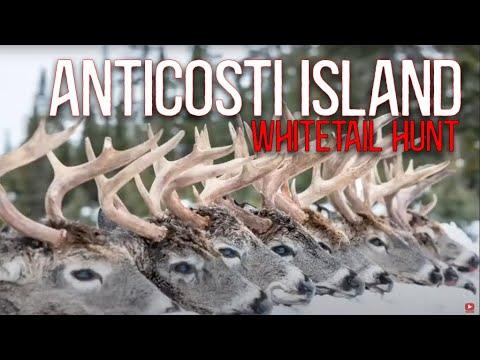 Anticosti Island Whitetail Hunt 2