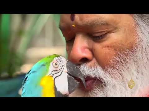 هذا الصباح - أكبر قفص طيور وسيلة هندي لموسوعة غينيس  - نشر قبل 2 ساعة
