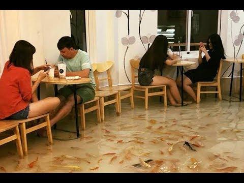 Fish Cafe In Vietnam | CCTV English