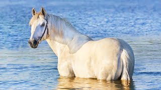 Horse SOO Cute! Cute And funny horse Videos Compilation cute moment #2
