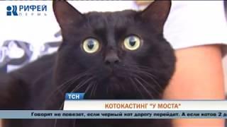 Пермский театр «У Моста» провел кастинг чёрных котов