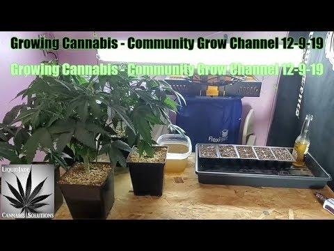 Growing Cannabis - Community Grow Channel 12-9-19