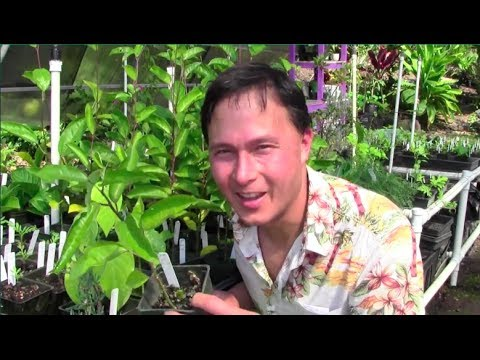 Tropical Perennial Vegetable Gardening in Hawaii