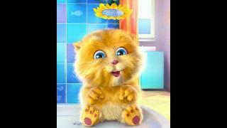 gato canta hasta el amanecer