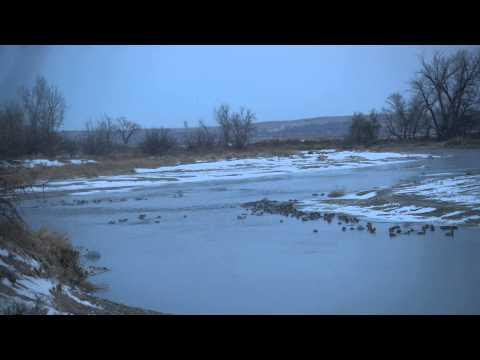 Nebraska wildlife