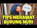 Tips Perawatan Nuri Pelangi  Mp3 - Mp4 Download