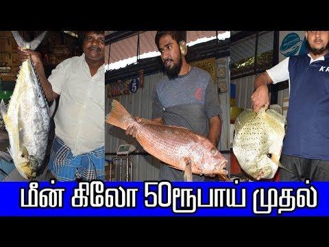 роорпАройрпН роХро┐ро▓рпЛ 50ро░рпВрокро╛ропрпН роорпБродро▓рпН -Gandhi Fish Market,рокро▓рпНро▓ро╛ро╡ро░роорпН - MSF