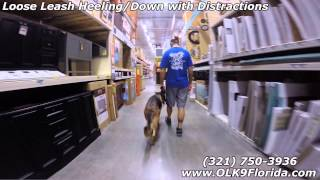 "3yr Old German Shepherd ""harley""! Owner Testimonial. Orlando Dog Training."
