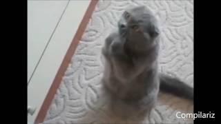 Смешные коты танцуют!