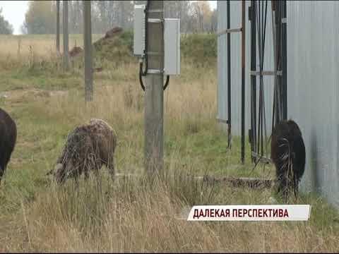 В Заволжском районе жителям делать дорогу пока не планируется