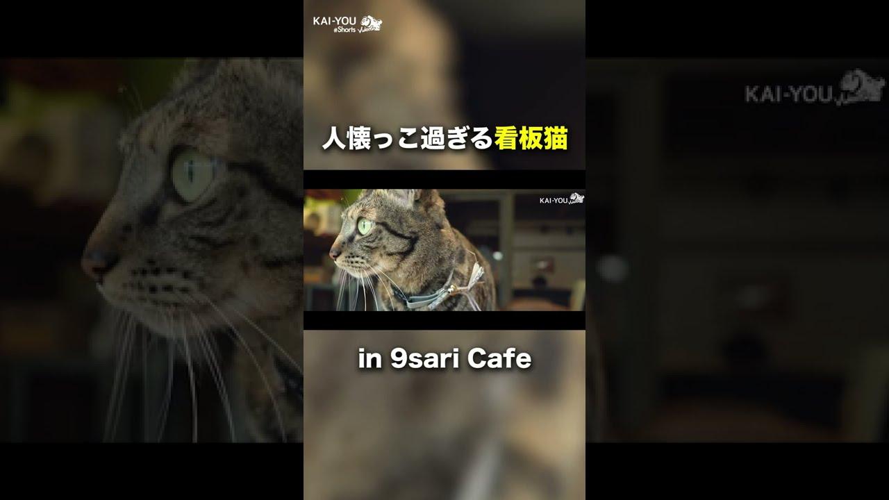 【看板猫】ラッパー・MC漢と働く猫が可愛過ぎる【続きはコメ欄】#Shorts