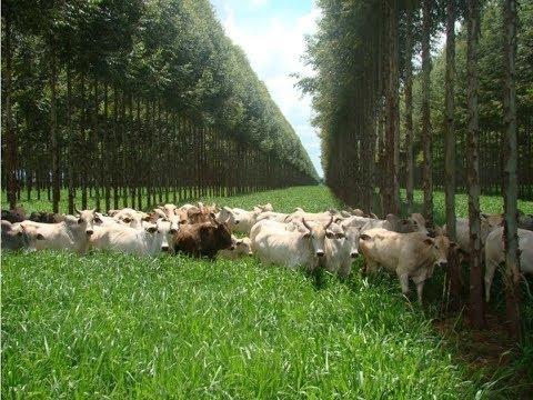 Clique e veja o vídeo Curso de Integração Lavoura, Pecuária e Eucalipto - Sistema Agrossilvipastoril - Cursos CPT