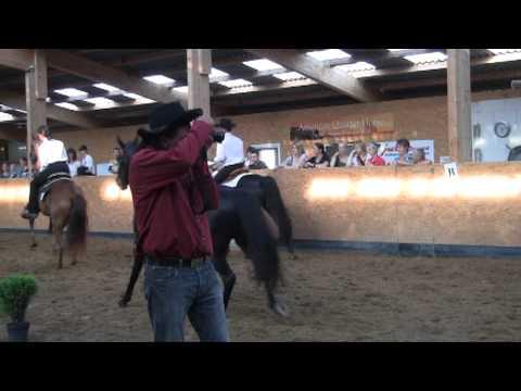 2012 Missouri Foxttrotter - EMFTHA Horses Show Berlin Germany