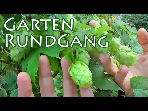 Garten Rundgang September + FMA + Vlog ++ The Krauts