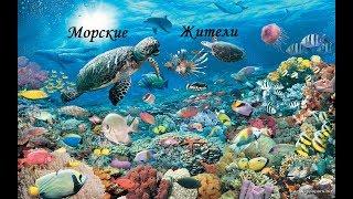 Морские жители | Учим морских животных | Обучающее видео для детей