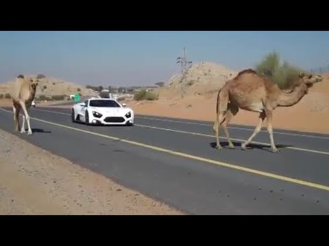 Cars and Camels - Zenvo ST1 - Top Gear Magazine