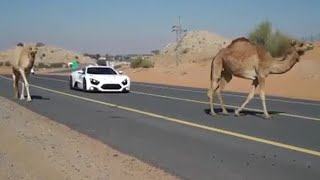 Cars and Camels | Zenvo ST1 | Top Gear Magazine
