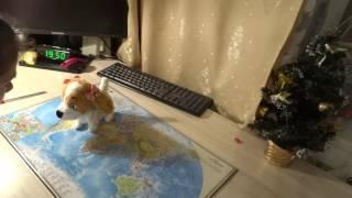 Интерактивная собака Лола