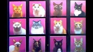Кафе кошек / котики / Республика кошек Санкт-Петербург / Animals Cats Cafe / Playground / Ники Таки