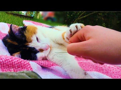 Cat Pushes Hand Away