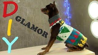 Гламурная Одежа Для Собак Своими руками за 5 мин 🐶 DIY