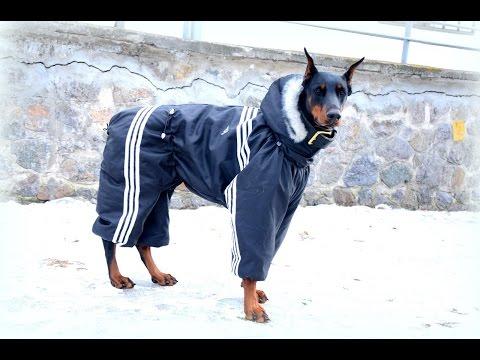 Комбинезон для собаки! Одежда для собак своими руками выкройки! Выкройка комбинезона для собаки