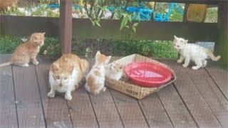엄마 고양이에게 밥 줬다가 5마리 고양이의 아빠가 되었네요