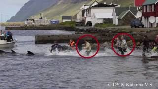 Shocking Photos of Faroese Footballers Participating in Whale Slaughter