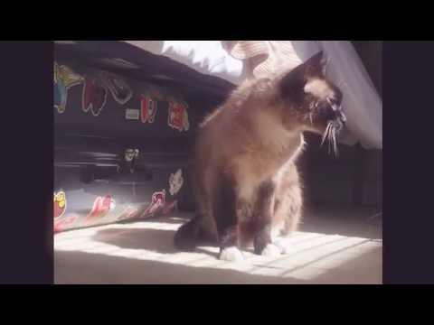 Everyday of Cat_ Cat cleanse _Cat Fun