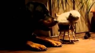Видео котенок качается на стуле cut Смотри