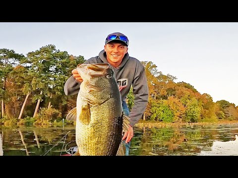 Catching GIANT BASS On TOPWATER! Frog Fishing!