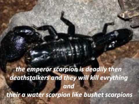7 Most Poisonous and Dangerous Scorpion in the World |Worlds Most Venomous Scorpion