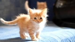 Nick - Ребёнок и котёнок.avi
